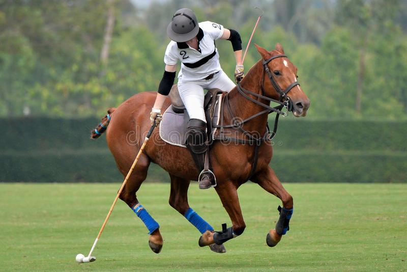 caballo asegurado